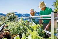 Garantiert aus ökologischem Anbau - Im Hochbeet ganzjährig eigenes Obst und Gemüse anbauen