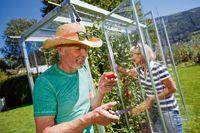 """Buttazoni macht die Tomatenzucht so komfortabel und einfach wie nie: Tomatenhaus """"Julia"""" schafft optimale Wachstumsbedingungen für das """"rote Gold"""" aus dem Garten."""